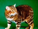 Welche dieser Katzten gibt es wirklich?