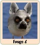 Was ist das lustigste Tier, das es gibt?