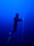 Wer hält den Weltrekord im Tieftauchen mit variablem Gewicht?