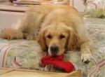 Der Hund der Tanners heißt Comet.
