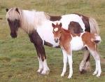 Wie heißt das Pferd von Nele und Emily?