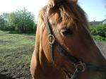Welche Farbe sollte dein Pferd bestmöglichst haben?