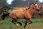 Was würdest du mit deinem Pferd trainieren?