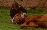 Welches ehemalige Pferd von Jack McLeod musste Claire erschiessen?