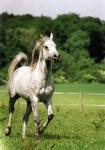 Zum Anfang etwas einfaches...Wie nennt man die Verbindung, die zwischen Pferdemaul und Reiterhand hergestellt werden sollte?