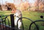 Wohin fährt ein Eichhörnchen, wenn es an seinem freien Tag einen Ausflug mit seiner Familie macht?