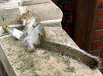 Wie sieht der Alltag deines Eichhörnchens aus?