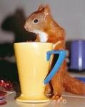 Wie beginnt dein Eichhörnchen seinen Morgen?