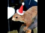 Wie sieht dein Eichhörnchen aus?
