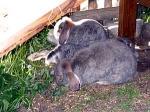 Was darf bei der Anschaffungeines Kaninchens nicht fehlen?