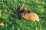 Was sollte dein Kaninchen wann für Futter bekommen?
