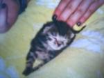 Wie lange dauert die Tragezeit bei Katzen im Durchschnitt?
