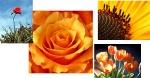 Welche Blume mögen Sie am meisten?