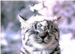Wie heisst das junge Kätzchen von Bebeth?