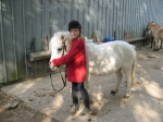 Welcher Pferdesport passt zu dir?