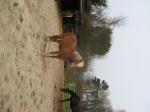 Ist dir das Aussehen deines Pferdes wichtig?