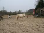 Welchen Pferdetyp bevorzugst du?