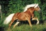 Zu welcher Rasse gehört dieses Pferd?
