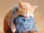 Was ist die Lieblingsbeschäftigung deiner Katze?