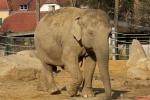 Welcher Elefant war mal ein Zirkuselefant?
