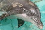 Wie heissen die Delphine aus dem Duisburger Zoo?