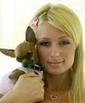 Wie heißt der Hund der von Paris ausgesetzt wurde?