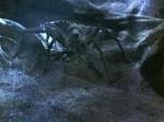 """Was schreit Aragog in seiner Höhle zu seinen """"Kindern""""?"""