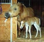 Pferde-Wissen
