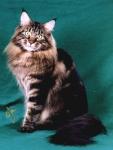 Etwas schwerer: Auf dem Bild ist eine Angora-Katze!