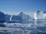 Die Arktis:Welches arktische Tier wiegt mehr als zehn erwachsene Männer und lebt auf mächtigen Eisschollen?(Leicht oder?)