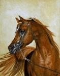 Welche Zuchtrichtung gibt es laut demVerband der Züchter des Arabischen Pferdes (VZAP) und dem Zuchtverband für Shagya-Araber, Anglo-Araber und Arab