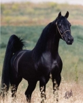 Bist du bereit für ein eigenes Pferd?
