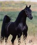 Weißt du schon welches oder was für ein Pferd du kaufen möchtest?