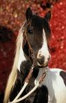 Ist dir ein Pferd schon einmal durch gegangen?