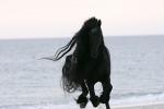 Wei�t du was zu tun ist wenn dein Pferd lahmt?
