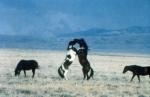 Würde es deinen Job/Schule nicht beeinflussen, wenn du ein eigenes Pferd hättest?