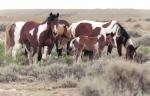 Hast du schon einmal Longiert? Gamaschen, Glocken und Bandagen einem Pferd angelegt?
