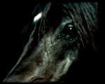 Hast du genug Geld f�r ein eigenes Pferd?