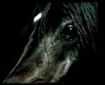 Hast du genug Geld für ein eigenes Pferd?