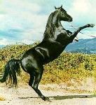 Wei�t du wo du dein Pferd einstellen kannst?