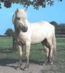 Was ist dein Lieblingspferd auf Monas Reiterhof und welches ist deine Lieblingsjahreszeit?