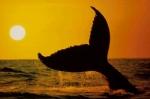 Wie gut kennst du dich mit Walen aus?