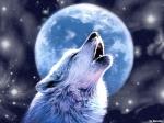 Die Hunde stammen von Wölfen ab.