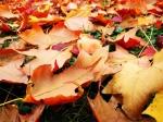"""Welche Zeile stammt aus """"Fallen Leaves""""?"""