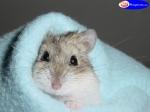 Hamster schlafen meistens am Tag und sind nachtaktiv. Die meisten Hamster mögen es nicht gerne geweckt zu werden. Deshalb sind Hamster nicht gut für