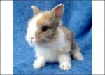 Du musst mehrmals am Tag mit deinem Kaninchen spazieren gehen, damit es Auslauf hat.