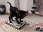 Deine Katze braucht einen extra Kratzbaum um sich daran die Krallen zu schärfen, damit zu spielen und auch um manchmal darauf zu schlafen.