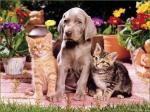 Man sollte sein Haustier überall hin mitnehmen, damit es sich besser an seinen Besitzer gewöhnen kann.