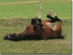 Pferde die zu Hause gehalten werden, sollten auch im Haus schlafen dürfen.