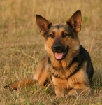 Bist du ein richtiger Hundekenner?